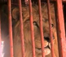 Lions ETA – May 27th
