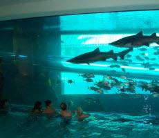 Press Release - CSI 11x02: Pool Shark ⋆ Fans of LeFox