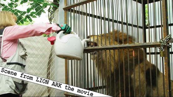 Jorja Presenting Lion Ark Film In Mill Valley