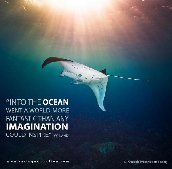 Into an ocean went a world more fantastic than any imagination could inspire.